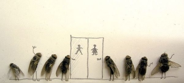 713096-dead-flies-art
