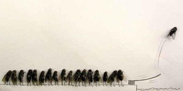 713099-dead-flies-art