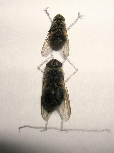 737955-dead-flies-art