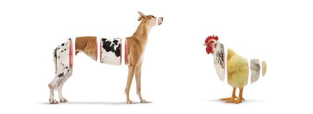 Dog & Chick