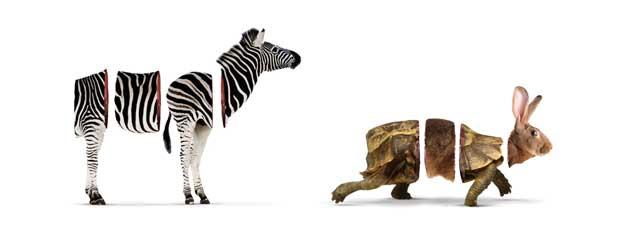 Zebra & TortoHare