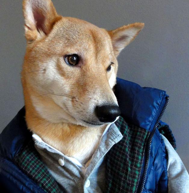 mensweardog_pufferjacket