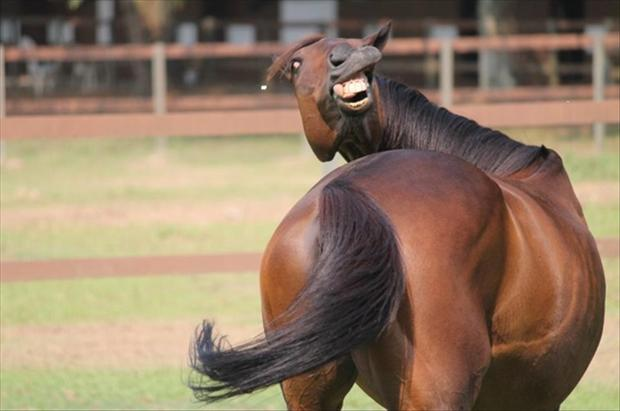 Funny-Horse-Happy Cup Day Truly Deeply