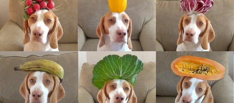 dogs-wearing-lots-of-hats